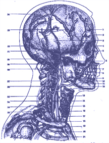 Blodgennemstrømningen i hovedet